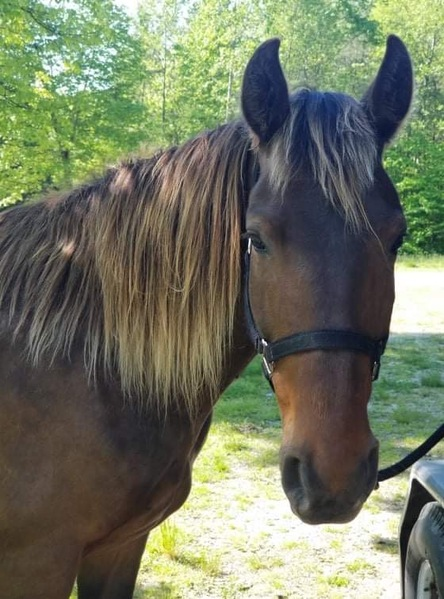 Gorgeous Easy To Ride Trail Horse Deluxe