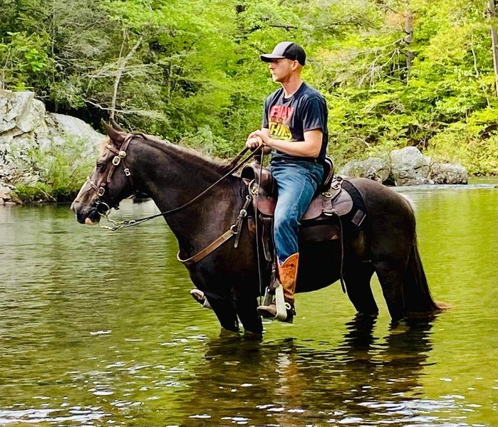 14.2 Seasoned Easy To Ride Trail Horse