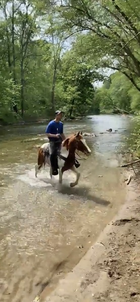 Easy To Ride Spotted Trail Horse Deluxe