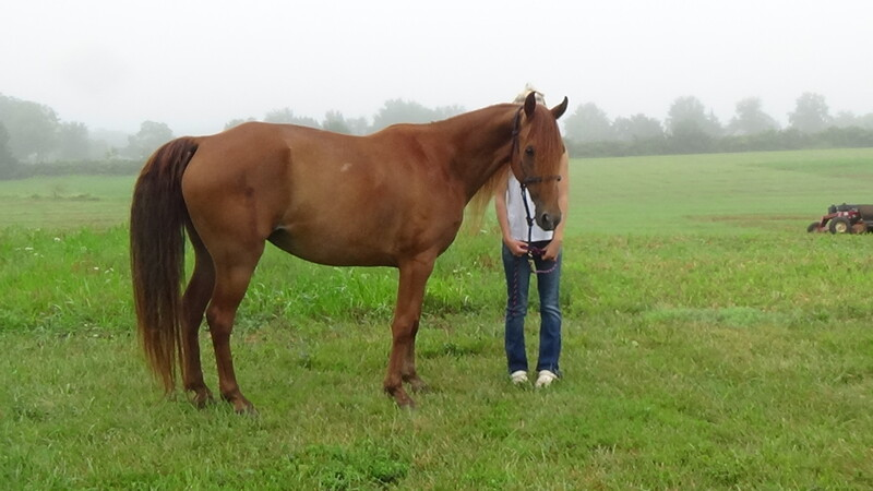 Bombproof Gorgeous TWH 30 day Guatantee