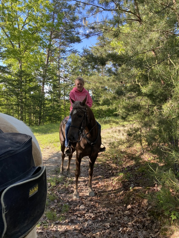 Well Bred Gorgeous Easy To Trail Horse