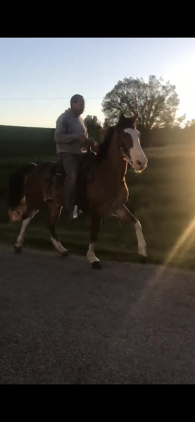 Easy To Ride Neck Reining Trail Horse Deluxe