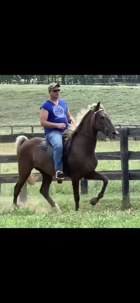 Novice Safe Trail Horse