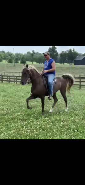 Novice Safe Trail Horse