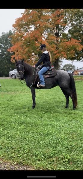 Beautiful Blue Roan Trail Horse