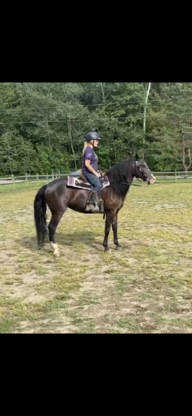Sweet Family Trail Horse
