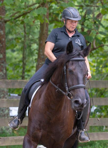 Friesian Heritage Sport Horse