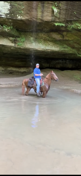 Easy To Ride Very Experienced Trail Horse