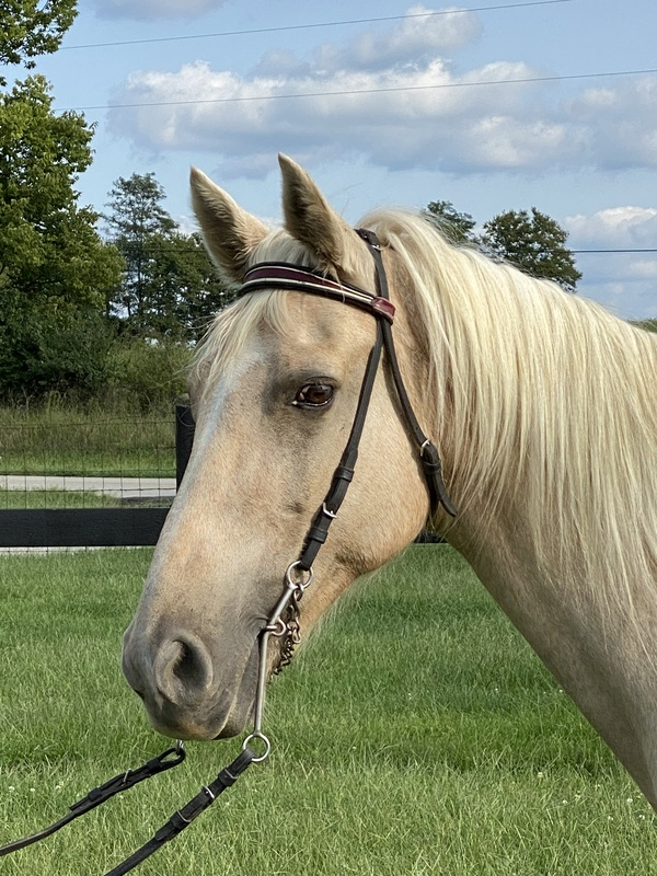 Novice Safe Palomino Trail Horse