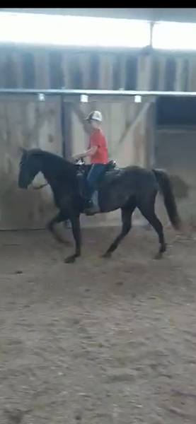 Gorgeous Well Bred Easy To Ride Filly