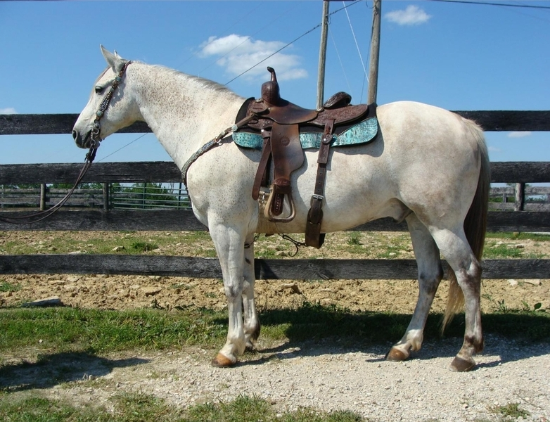 Gorgeous Grey Cow Horse Deluxe