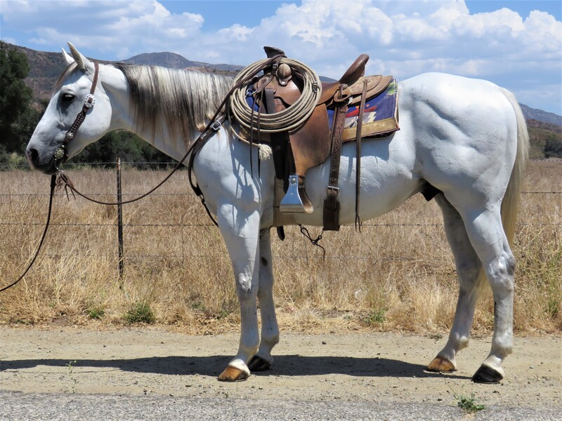 8 YEAR OLD 15.1 HAND GREY GELDING **SOLD**