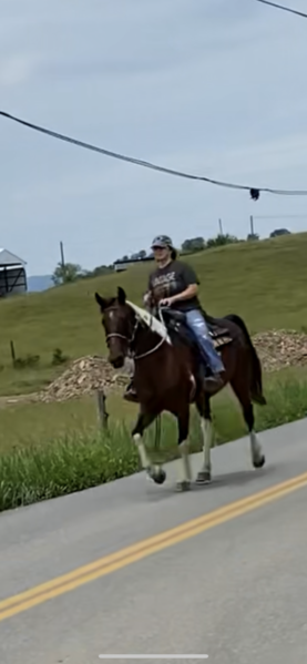 Sweet Experienced Kid's Horse