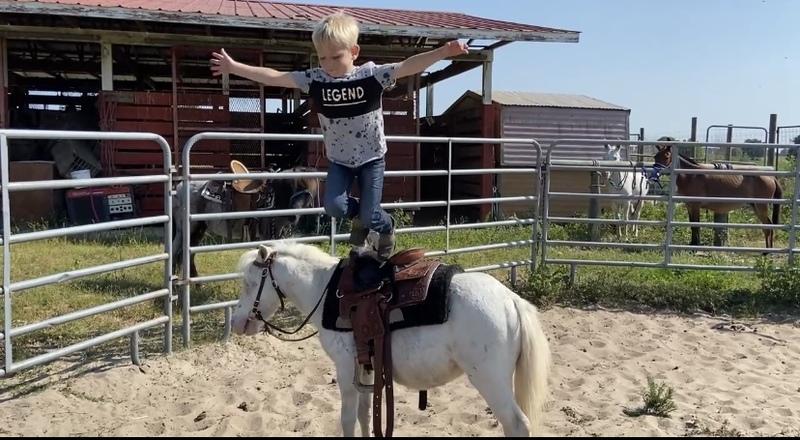 Ride and drive mini gelding little unicorn
