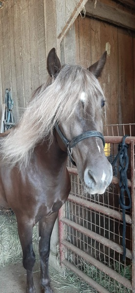 Drop Dead Gorgeous Easy To Ride Neck Reining Trail Horse