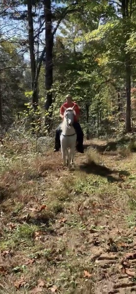 Easy To Ride Family Trail Horse