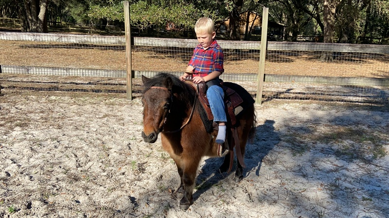 Kid safe and sweet ride and drive mini gelding