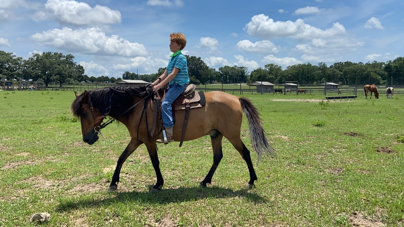 Safe, fun, and smooth Paso gelding