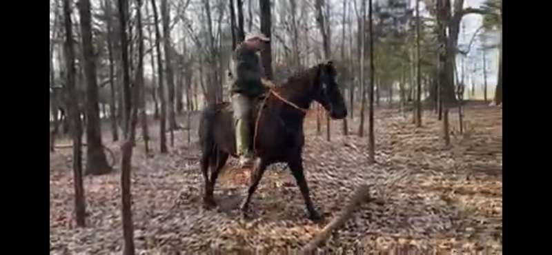 Gorgeous Neck Reining 15.2 Talented Trail Horse