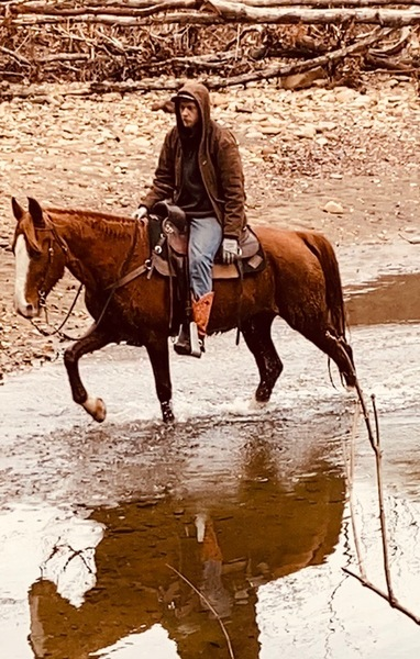 Bomb Proof 15.1 Experienced Trail Horse