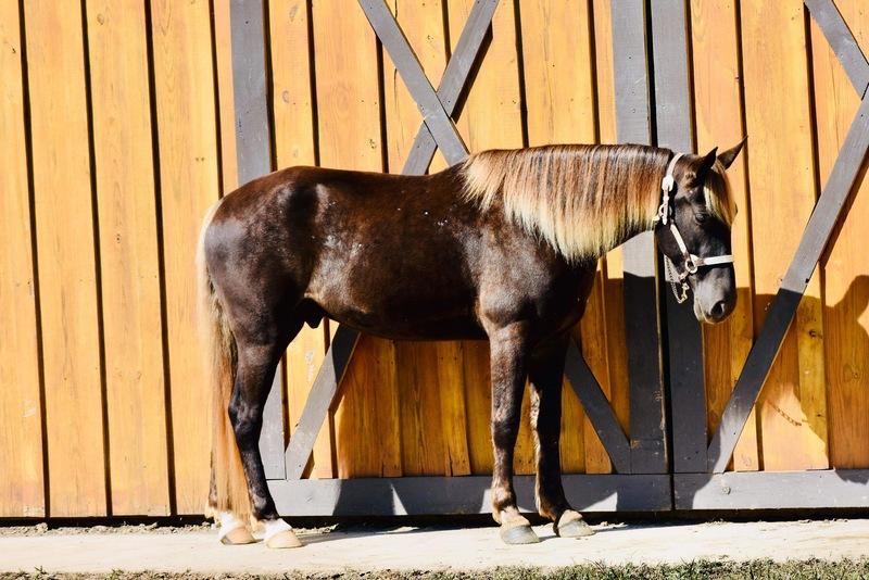 Sweet, Gorgeous Novice Safe Trail Horse
