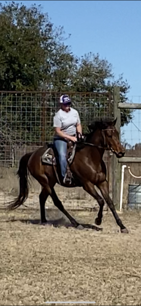 TB gelding with a great mind NEVER RACED!