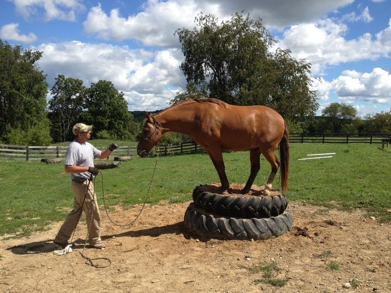 Stunning 15.2 Trail Horse