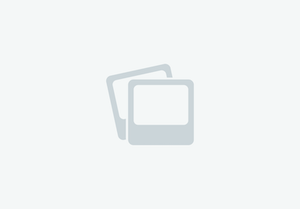 HyDrive Cat Tobiano Colt Fancy
