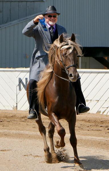 Drop Dead Gorgeous Show/Trail Stallion