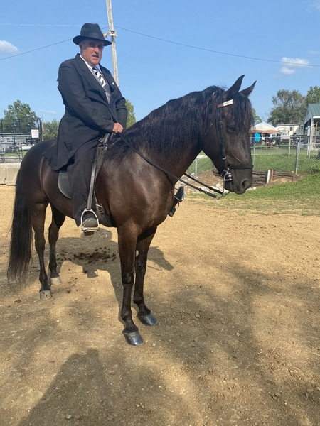 Accomplished Multi Champion Black Gelding