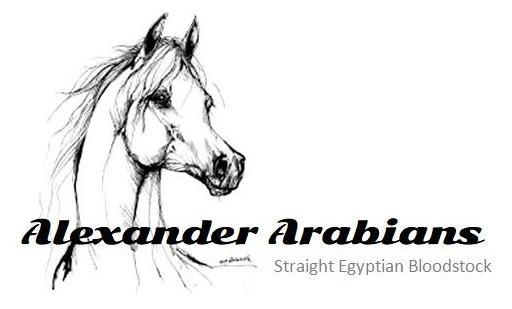 Alexander Arabians